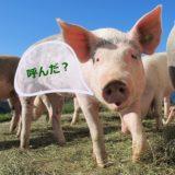 豚毛ブラシの洗い方