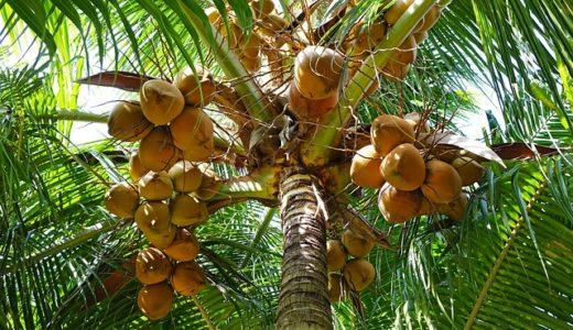 ココナッツオイルが万能すぎる!驚きの美容効果いろいろ